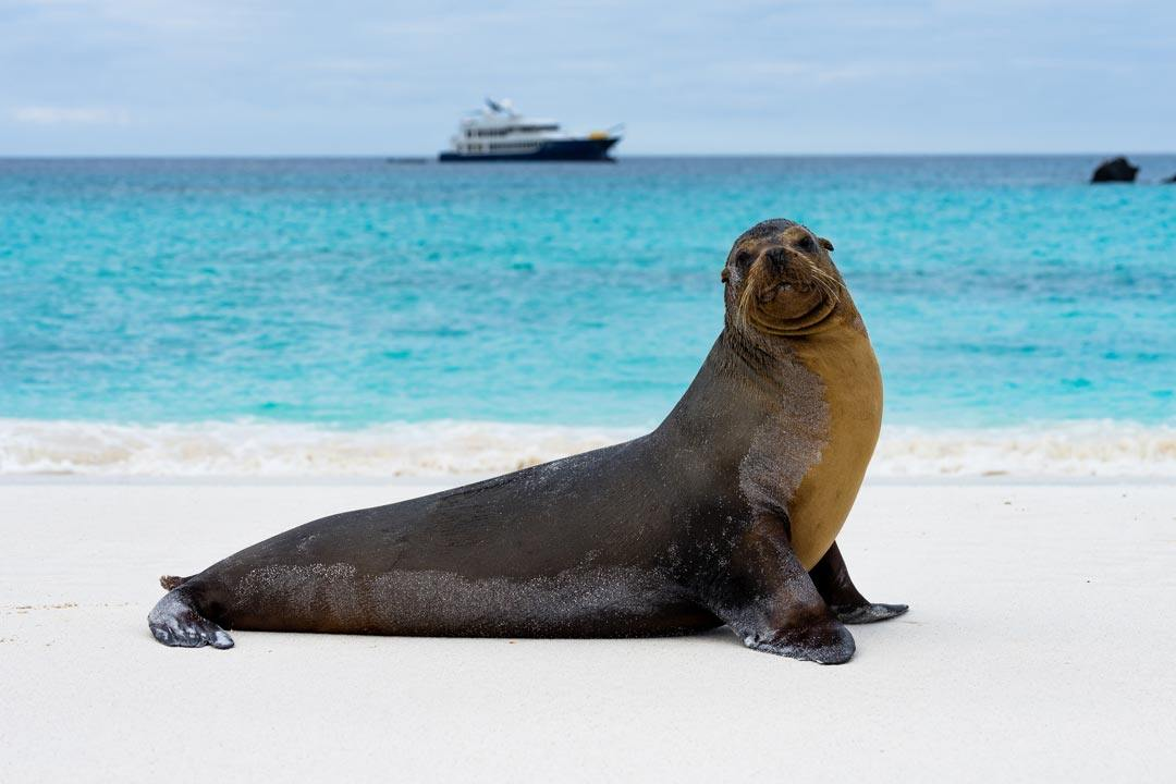 Ecoventura Itinerary A Review Origin Galapagos Islands
