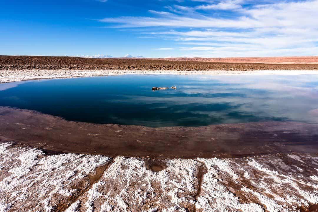 Laguna Baltinache Atacama Desert