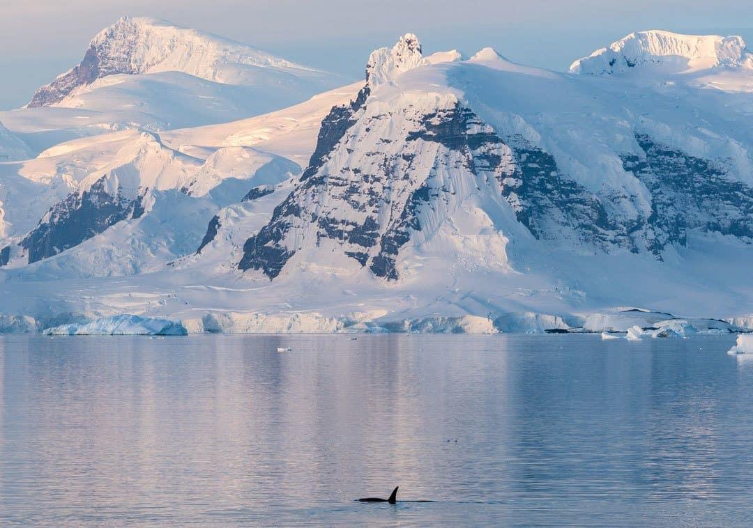 Orca Antarctica
