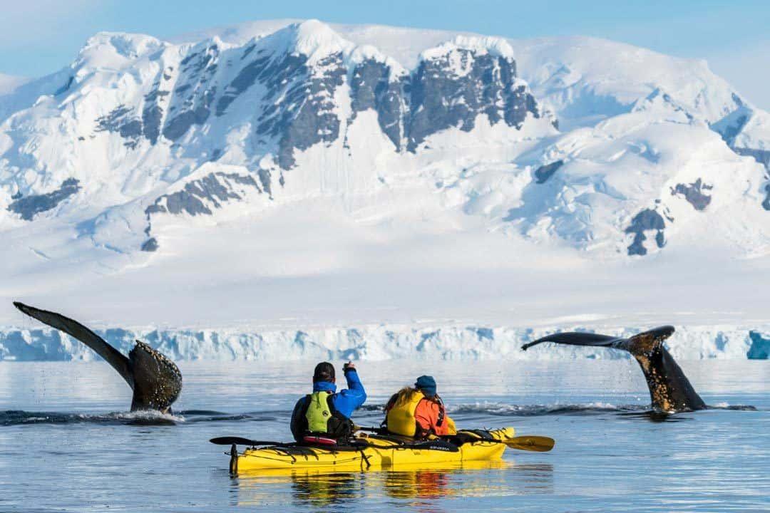 Humpback Whale Antarctica Kayak