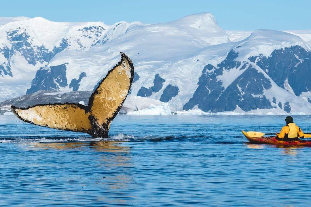 Humpback Whale Kayaker Antarctica