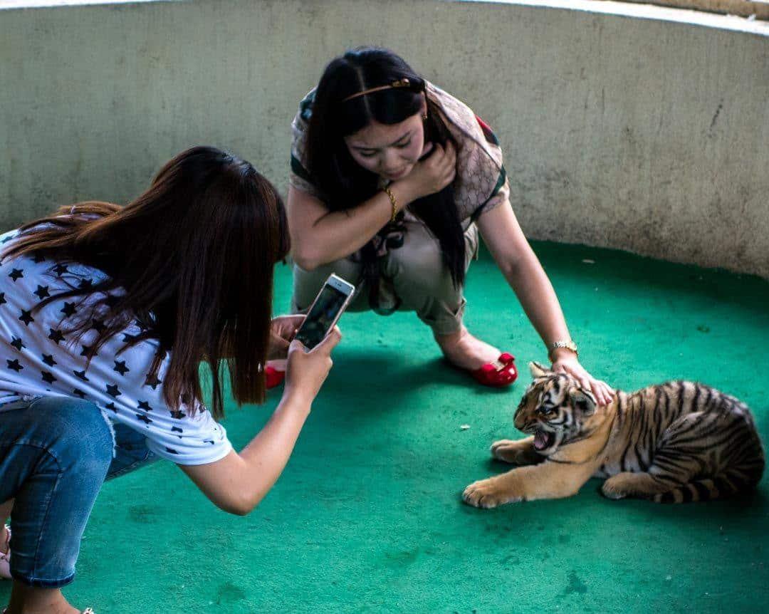 Scared Tiger Cub