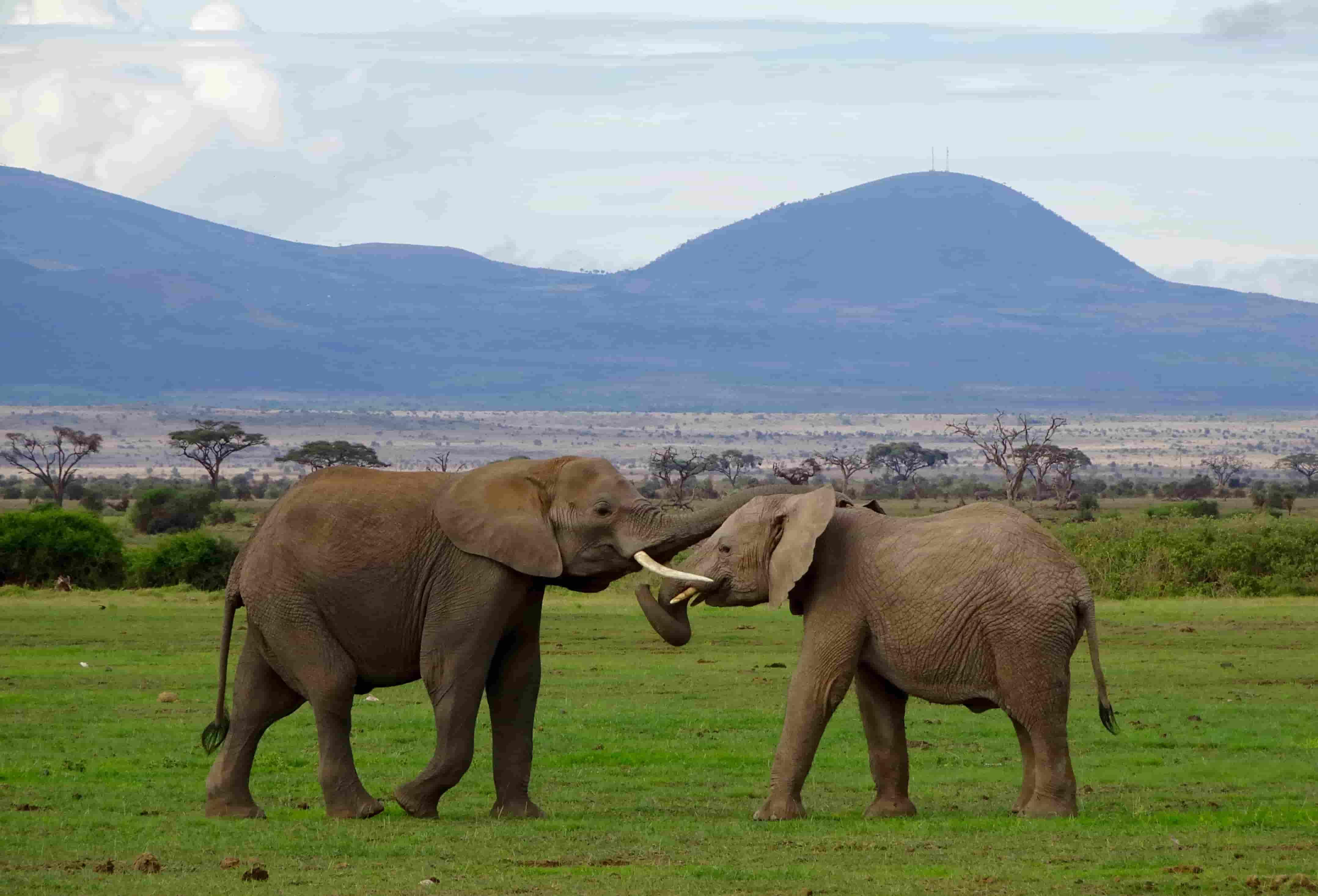 Elephants In Amboseli Adventure Activities In Kenya