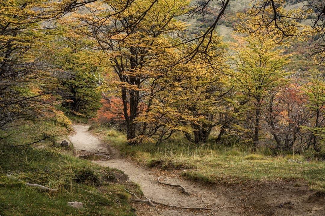 Autumn Colours Patagonia