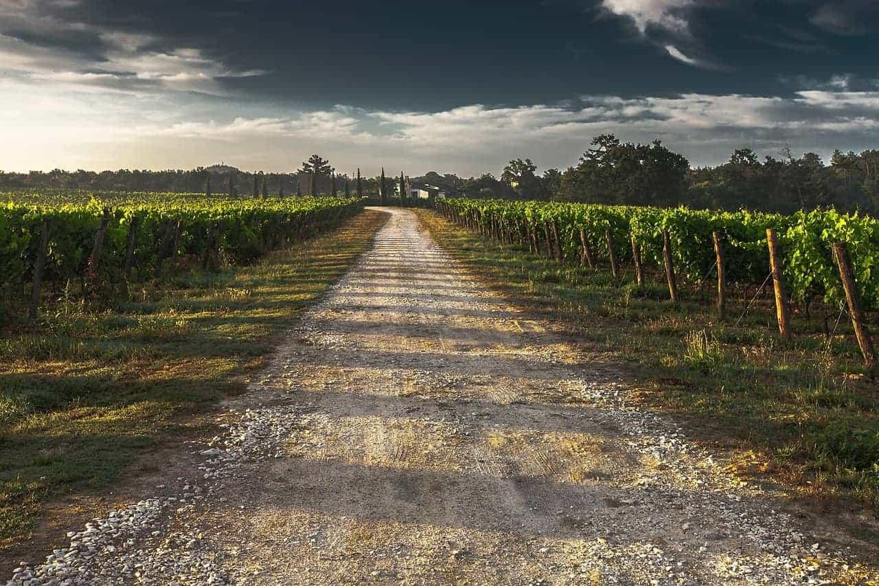 Swan Valley Vineyards