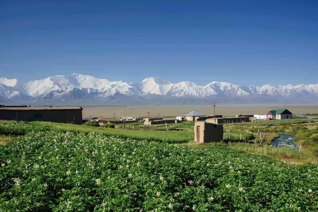 Sary Moghul Views