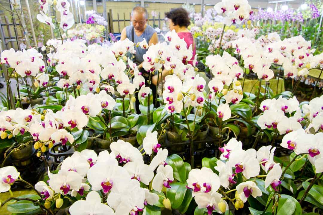 The Jianguo Weekend Flower Market
