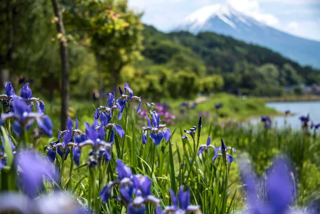 Japan Day Trips, Mt Fuji