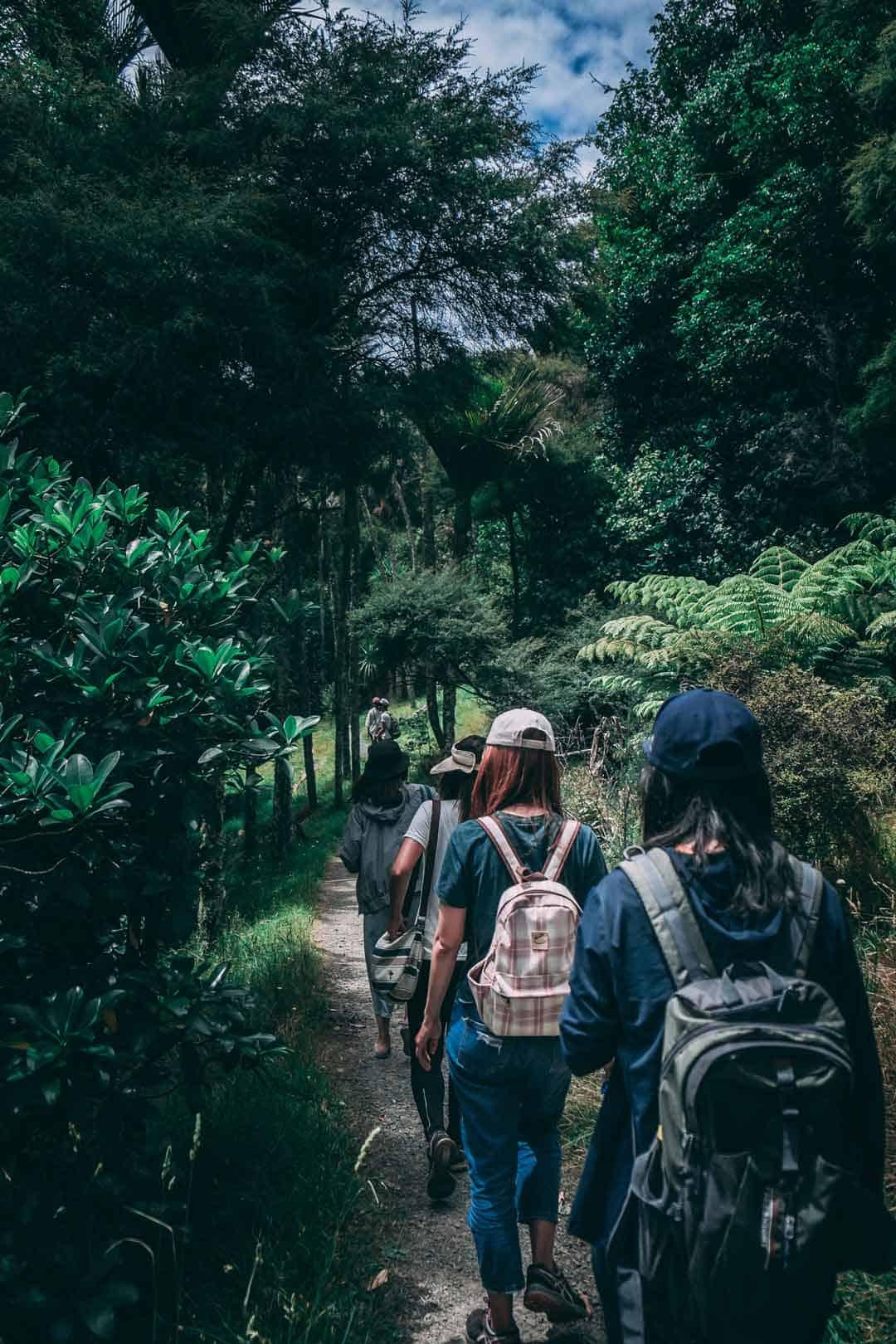 Rainforest, Trekking, Hiking