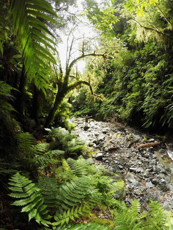 Trekking On The South Island