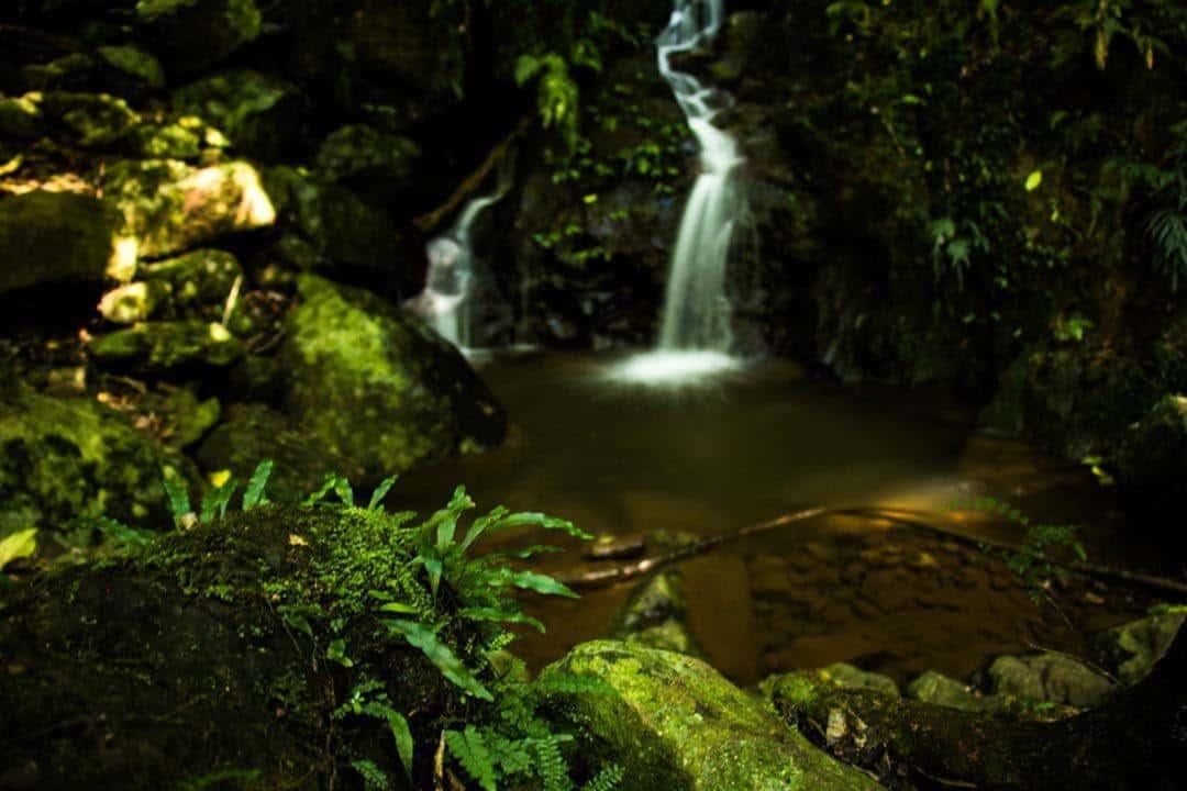Natural Beauty Bellingen