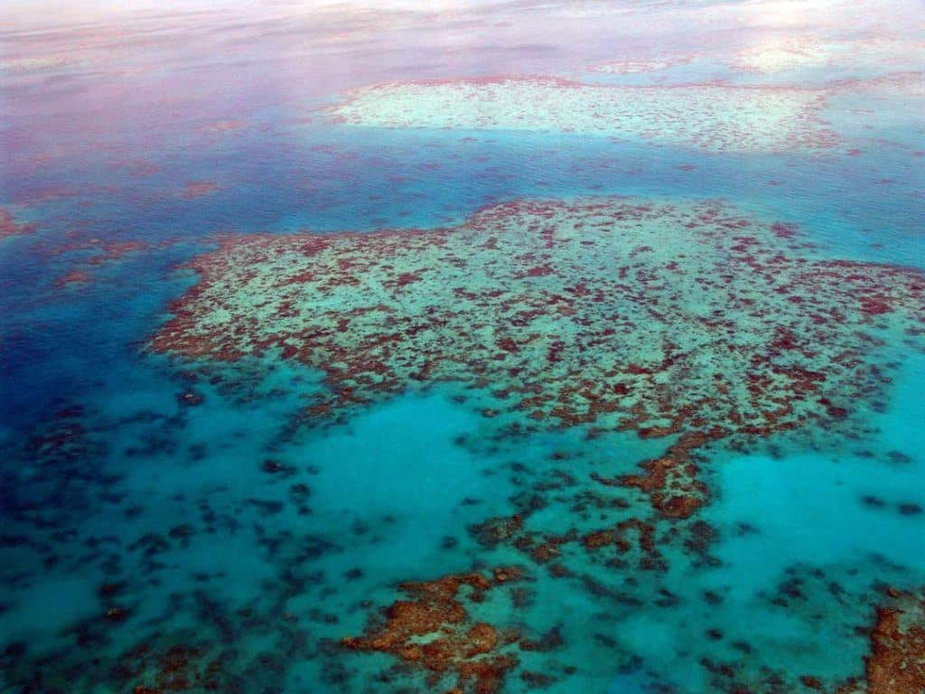 great barrier reef, things to do in cairns