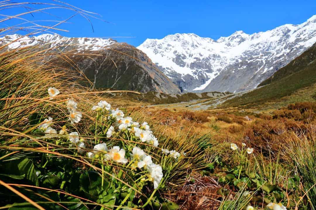 Trekking New Zealand