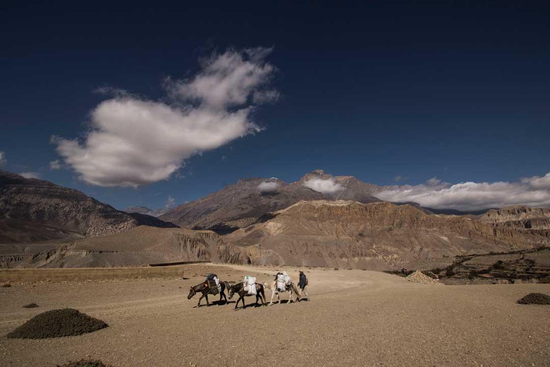 Ponies In Mustang