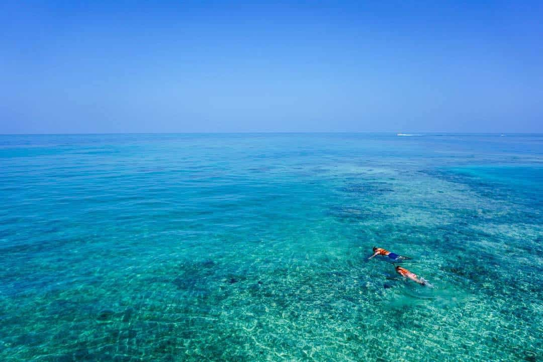 snorkeling, things to do in cairns