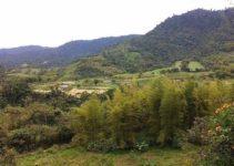 9 Unique Things to Do in Mindo, Ecuador