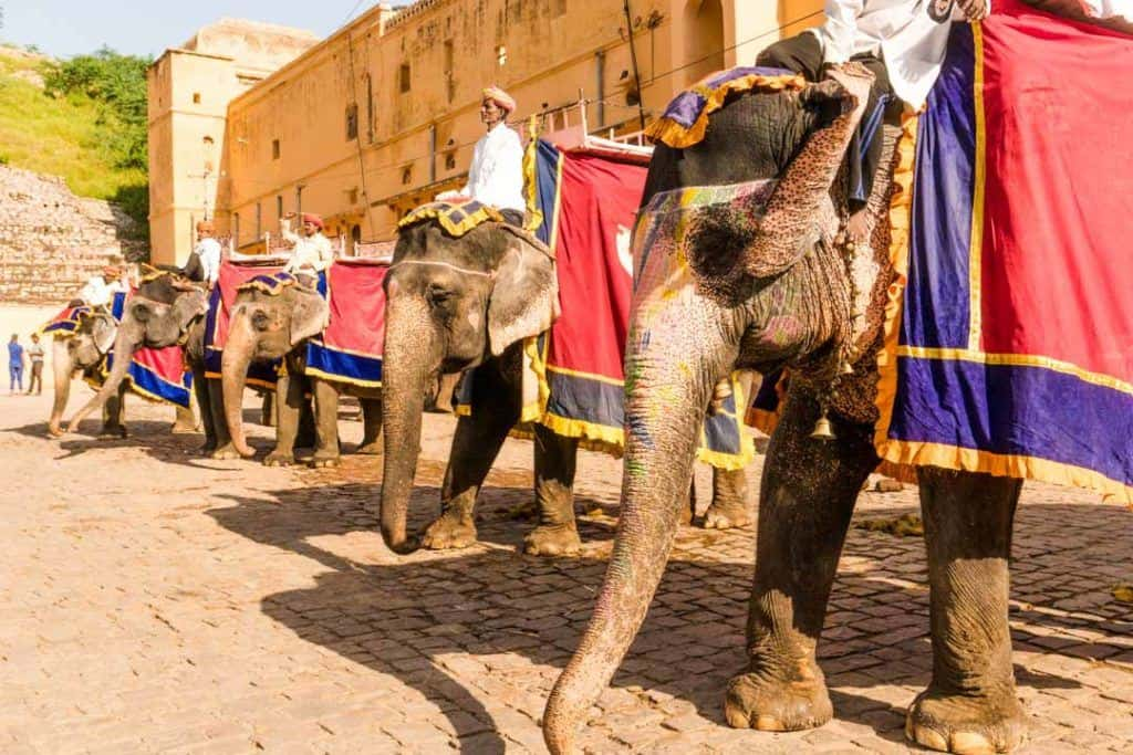Elephants Queue For Tourists Doing An Elephant Ride In Jaipur.