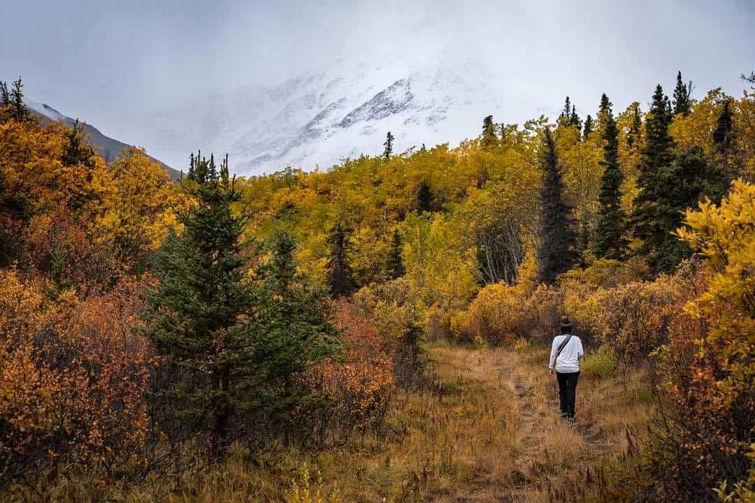 Auriol Trail Haines Junction Yukon