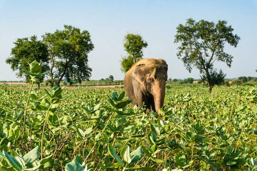 Elephant Tourism In India