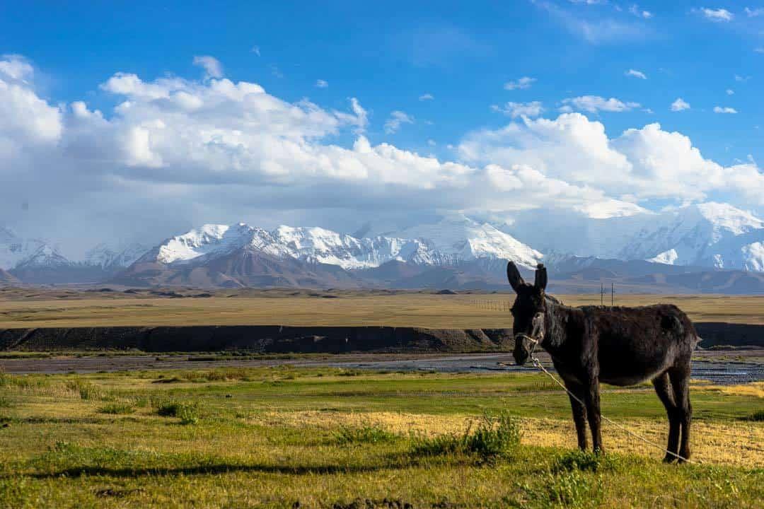 Donkey Peak Lenin
