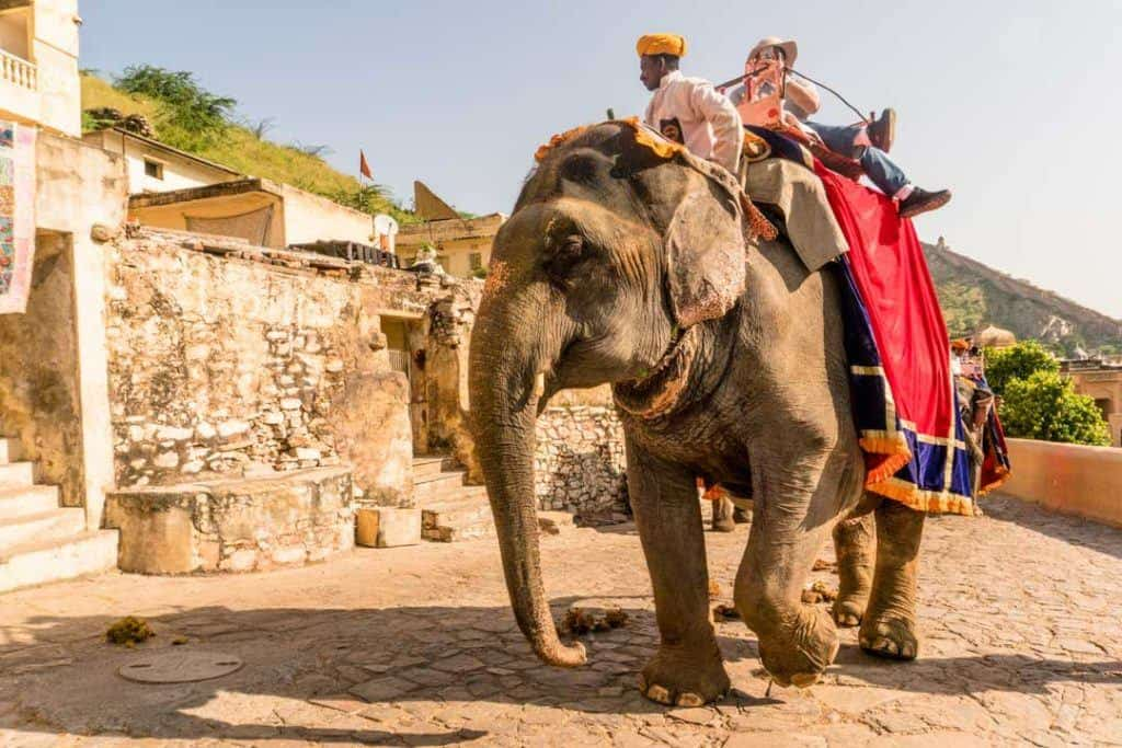 Tourist Is Carried to Amber Fort On An Elephant Ride In Jaipur India.