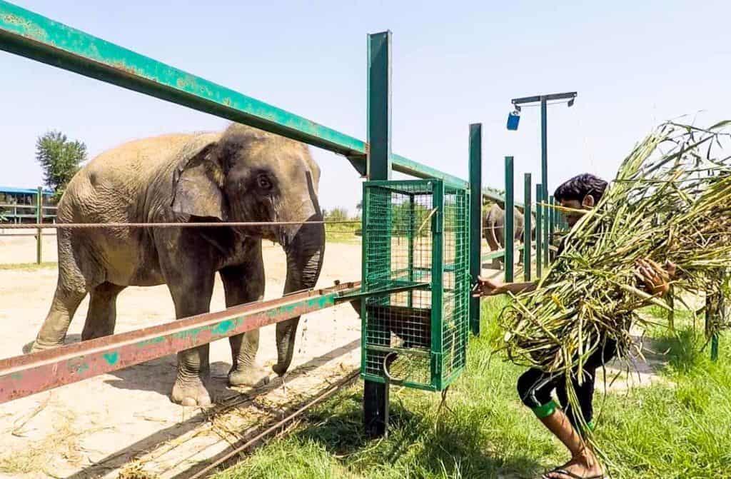 Young Elephant At The Wildlife SOS Elephant Sanctuary India.