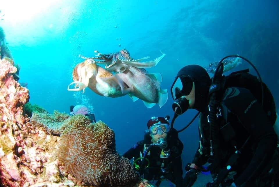 diver exploring marine life