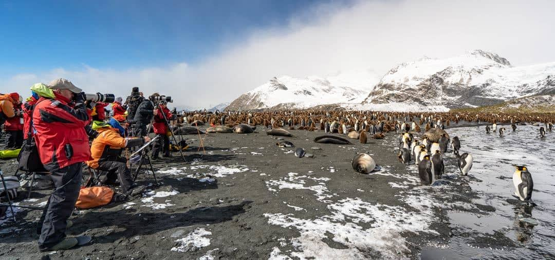 South Georgia Travel Penguins