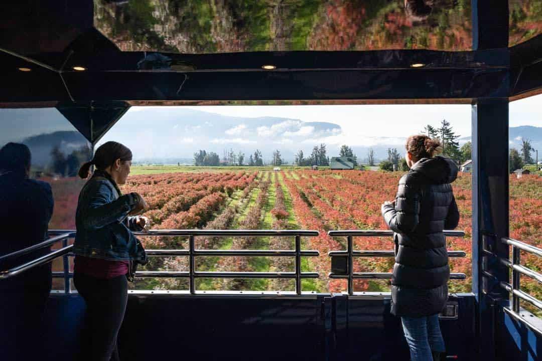 Outdoor Viewing Platform Farmland