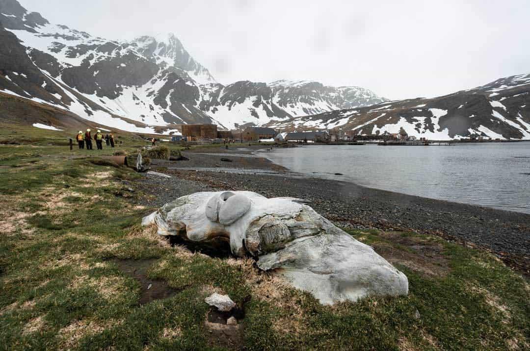 Whale Bone Grytviken