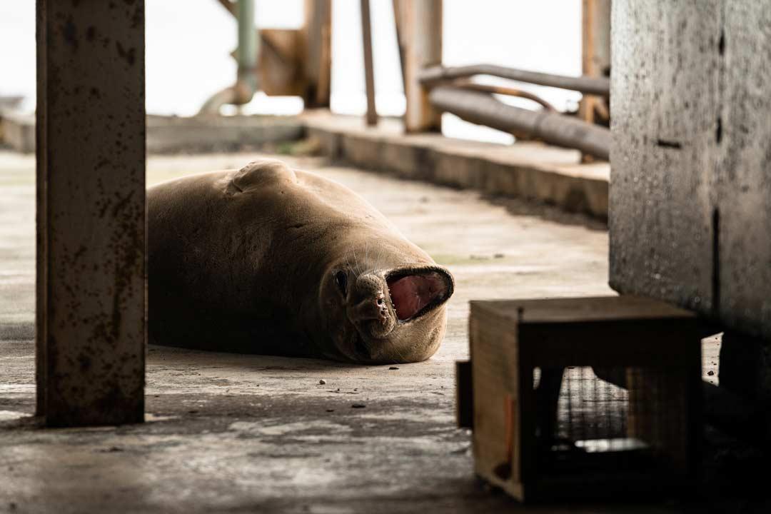 Fur Seal Whaling Station
