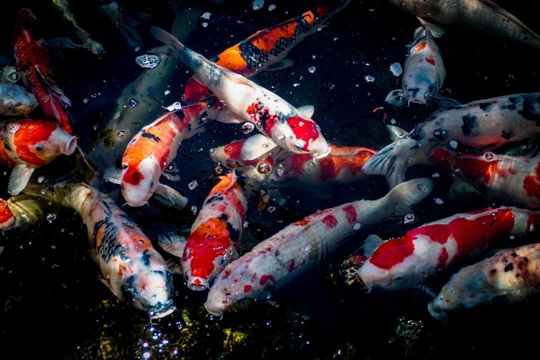 Nishiki Market, Kyoto, Japan, Fish