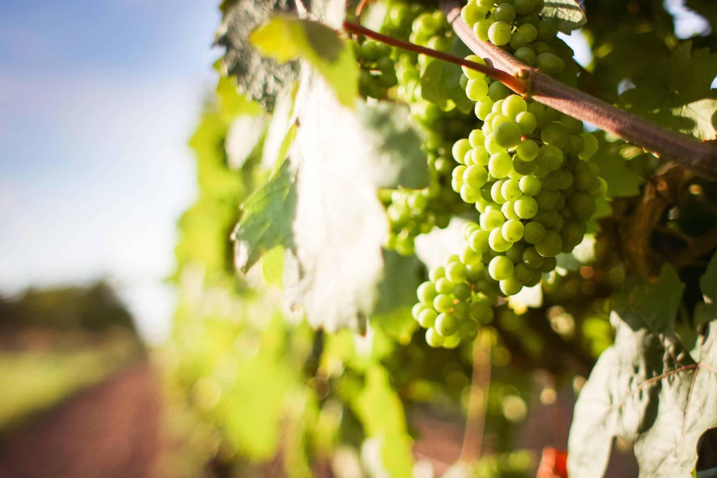 Wine Region, Hunter Valley