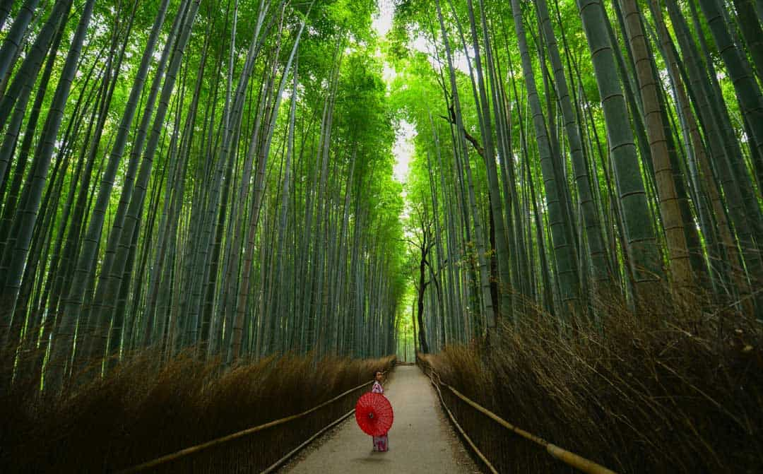 Things To Do In Kyoto, Japan, Forest, Geisha
