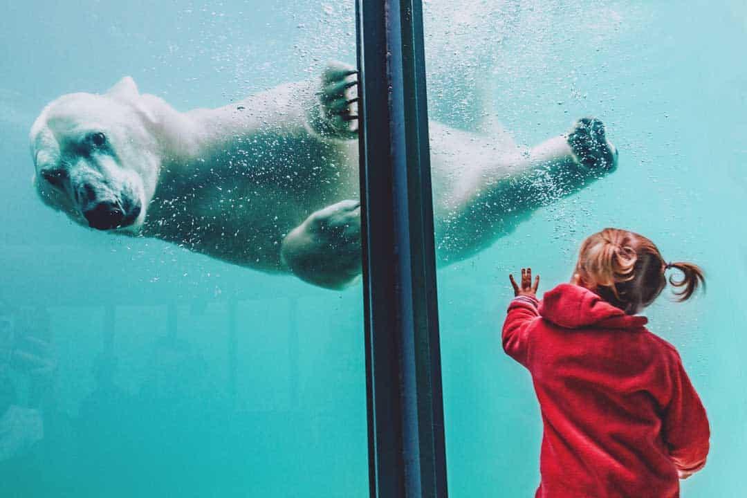 Japan, Sapporo, Polar Bear