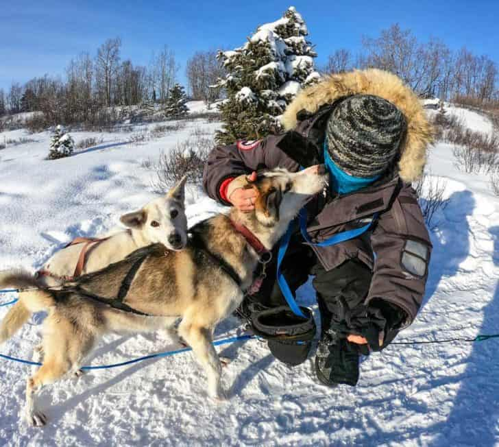 Is Dog Sledding Cruel? The Truth About Dog Mushing Tours