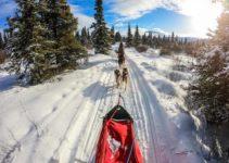 Dog Sledding in Yukon – The Ultimate Canadian Winter Adventure
