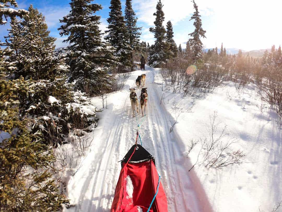 Dog Sledding in Yukon