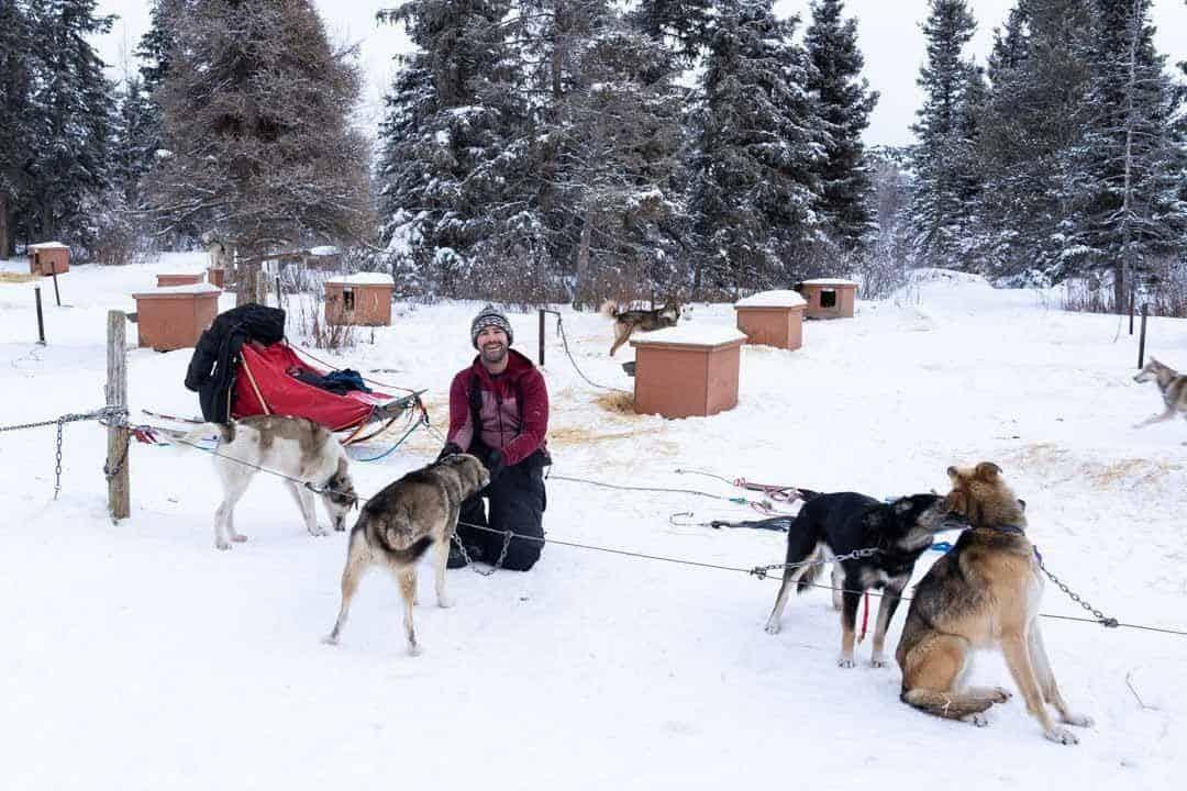 Harness Dog Sled in Yukon