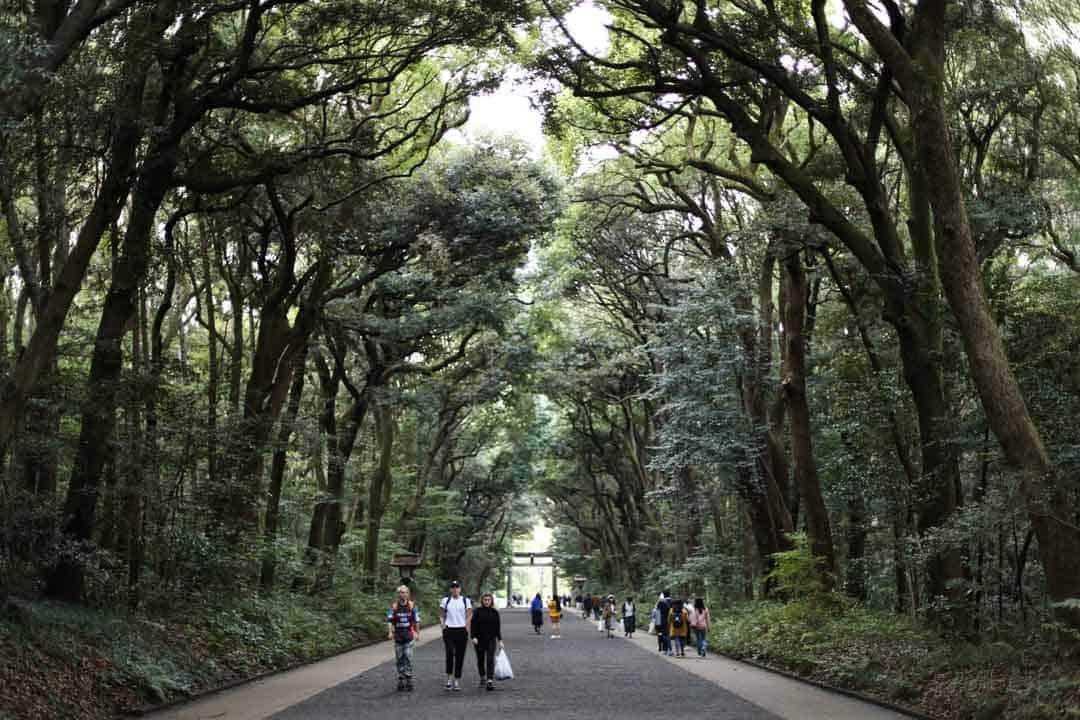 Meiji Shrine, Forest, Japan