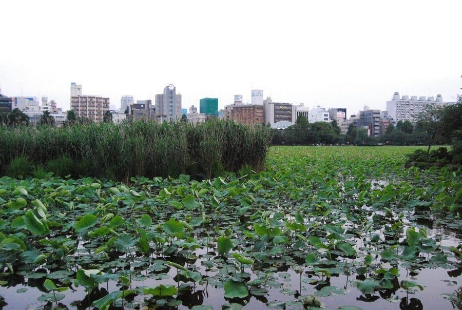 3 Days In Tokyo Parks