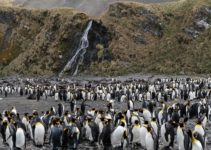 The Best Time to Visit South Georgia Island