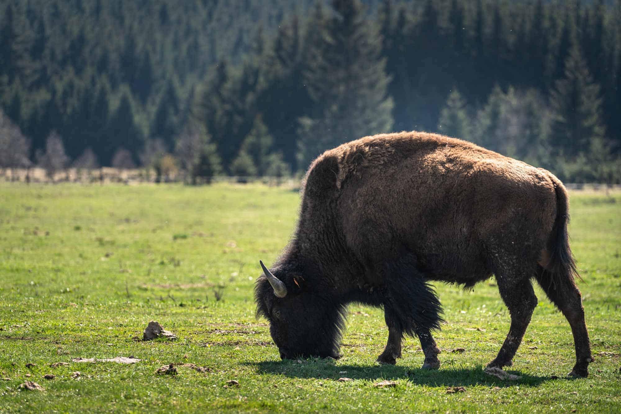 Bison Ranch South Bohemia