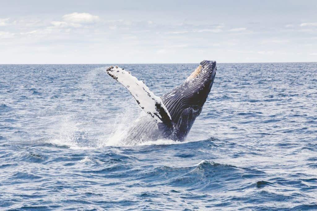 Whales Okinawa Activities