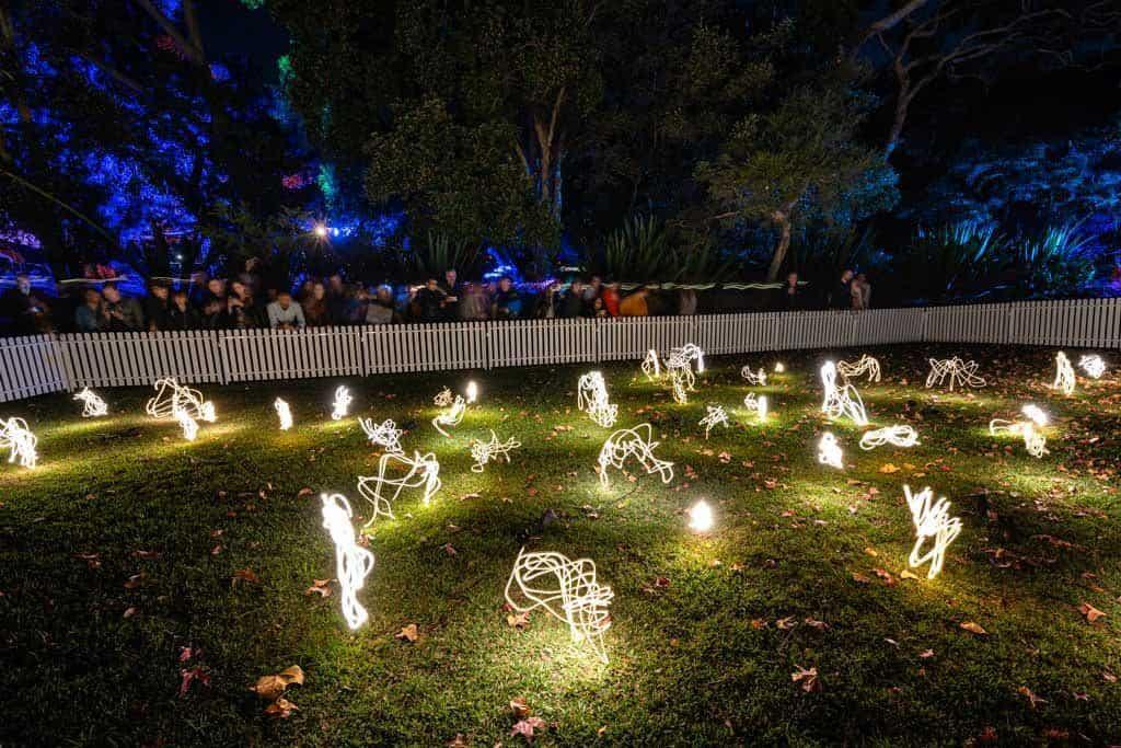Fireflies Vivid Photography Tips