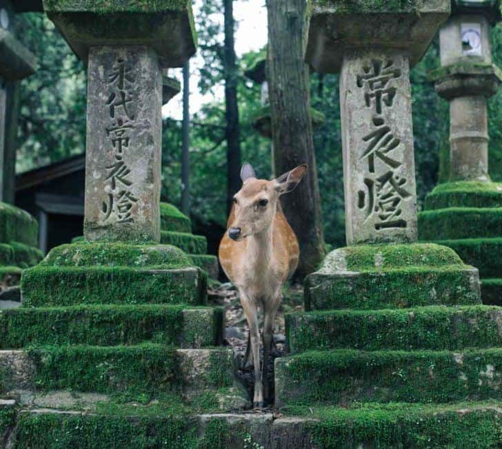18 Amazing Things to Do in Nara, Japan (2020 Guide)