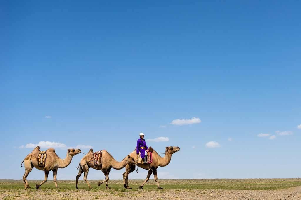 Nomadasaurus Mongolia Tour