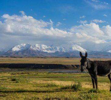 Sary Mogol Kyrgyzstan