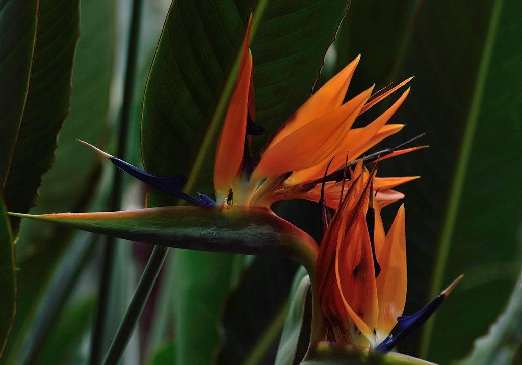 Flower At Royal Botanical Gardens Hamilton Ontario