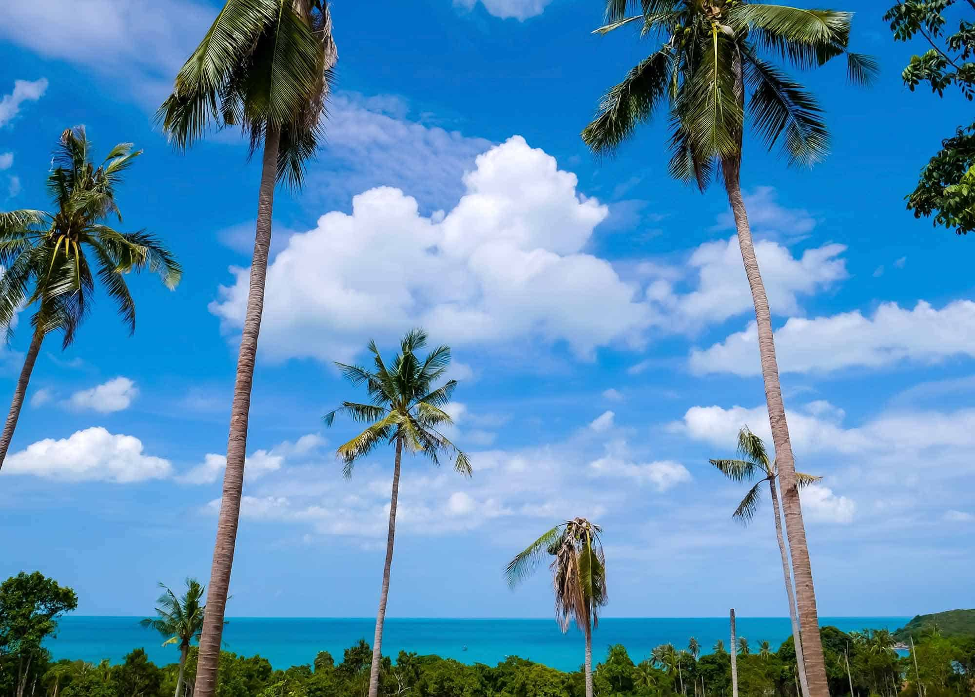Things To Do In Koh Samui Thailand